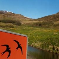 015- Isafjordour Islanda
