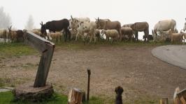 Pag. 20 Località Poun Van Spitz